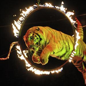 Цирки Торжка