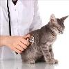 Ветеринарные клиники в Торжке
